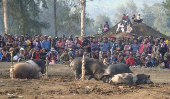 Hỗn chiến vì một con lợn, 10 người thiệt mạng