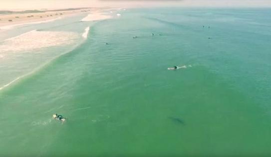 Video: Thót tim cá mập trắng khổng lồ bơi ngay cạnh người lướt sóng