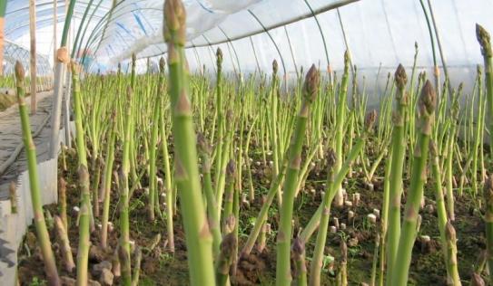 Nông dân đua nhau trồng cây ngọai nhập thu trăm triệu/năm