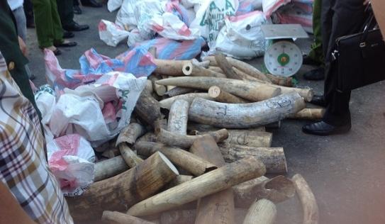 Phát hiện 3 container chứa hơn 2,2 tấn ngà voi trị giá 100 tỷ ở Đà Nẵng