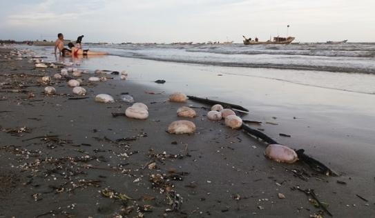 'Vật thể lạ' hình trứng bốc mùi hôi thối dạt vào bờ biển Trà Cổ, Quảng Ninh