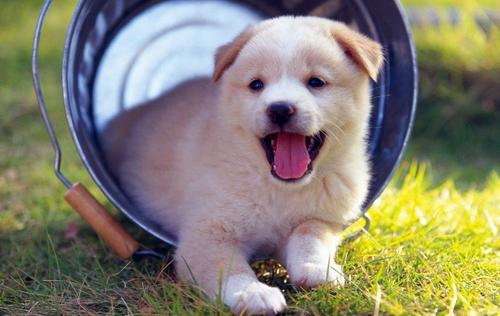Mẹo chọn chó khôn giúp bạn muôi dạy dễ dàng hơn