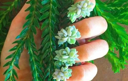 """""""Cơn sốt"""" làm đẹp - trồng cây trên móng tay"""