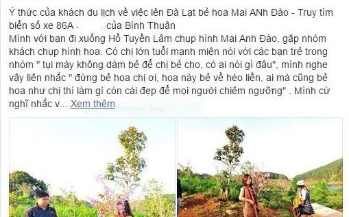 Phó giám đốc Sở Tư pháp Bình Thuận trần tình việc bẻ hoa anh đào