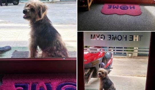 Chó bỗng dưng quay về tìm chủ cũ sau 3 năm bị bắt đi