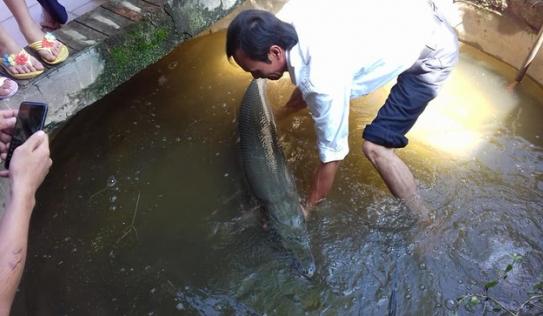 Nước lũ ngập đến cửa sổ, cá sấu hỏa tiễn gần 30 kg bơi vào nhà dân
