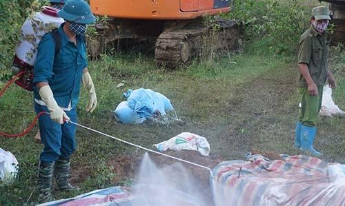 Mang tiêu hủy hàng nghìn con lợn chết do mưa lũ ở Thanh Hóa