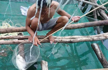 Cá lồng chết bất thường hàng loạt, dân nghi do chất thải khoan hầm