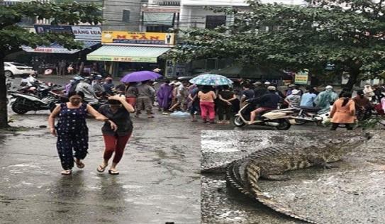 Thực hư về vụ cá sấu lên bờ 'làm loạn' giữa khu chợ