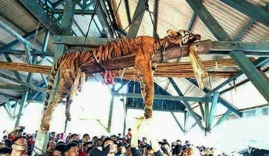 Phẫn nộ hổ quý bị đâm chết rồi treo xác