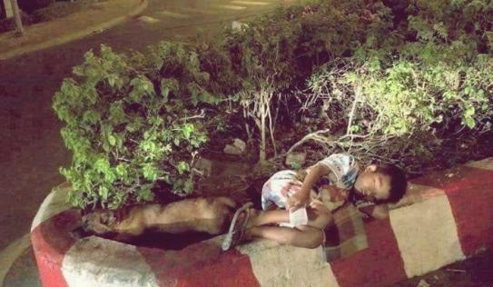Hình ảnh cậu bé bán vé số nằm ngủ ngon lành cạnh chú chó nhỏ trên dải phân cách khiến nhiều người thương cảm