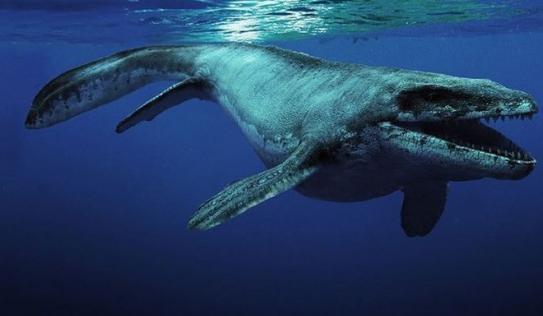 Mỹ: Bất ngờ tìm thấy thủy quái 85 triệu tuổi