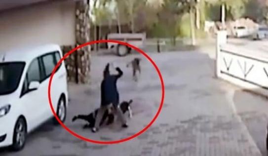 Hãi hùng khoảnh khắc bé gái 8 tuổi bị chó pitbull tấn công trên đường