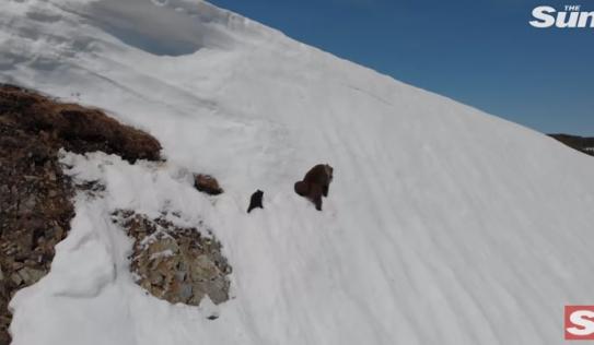 Gấu con leo đỉnh núi tuyết dựng đứng để tới chỗ mẹ gây 'bão mạng'