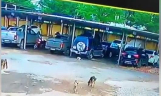 Chú chó bị cán chết ở bãi đỗ xe, chủ nhân đăng đàn tố cáo gây tranh cãi lớn trên MXH
