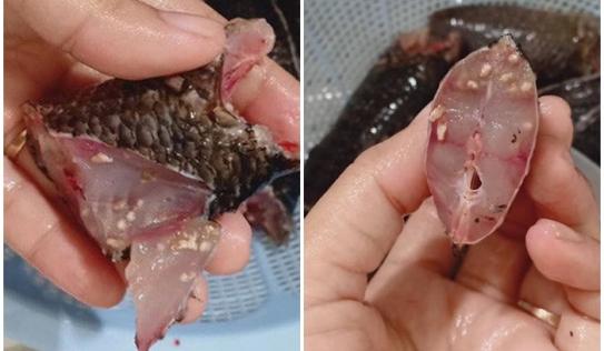 Dân mạng hoang mang trước hình ảnh thịt cá rô đồng đầy sán loe ngoe, không biết giờ nên ăn gì