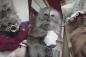 30 triệu lượt xem video chú khỉ thích trang điểm, mặc váy trên Youtube