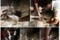 Dân mạng xúc động vì chú chó bị hoại tử Bến Tre được cứu chữa kịp thời
