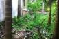 Hà Nội: Nghi can thừa nhận sát hại thiếu nữ, giấu xác trong vườn