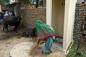 Gia đình tan nát vì không có nhà vệ sinh
