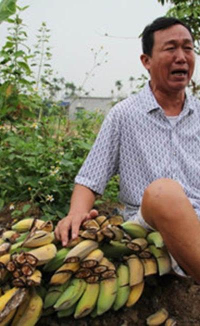 Hình ảnh Vụ 3.000 cây chuối bị đốn gục: Công an Hải Phòng lên tiếng số 1