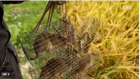 Truyền hình Hàn Quốc thích thú khám phá đặc sản thịt chuột An Giang 2