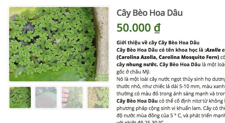 Loại cây vứt đầy bờ ao cho không ai lấy bỗng được rao bán trên mạng giá 100.000 đồng 3