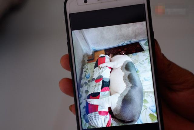 Cô gái Sài Thành nuôi heo 150 kg làm thú cưng, cùng ăn cùng ngủ 4