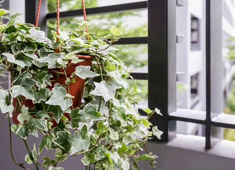 5 loại cây cảnh nên trồng trong nhà để lọc không khí tốt cho sức khỏe 2