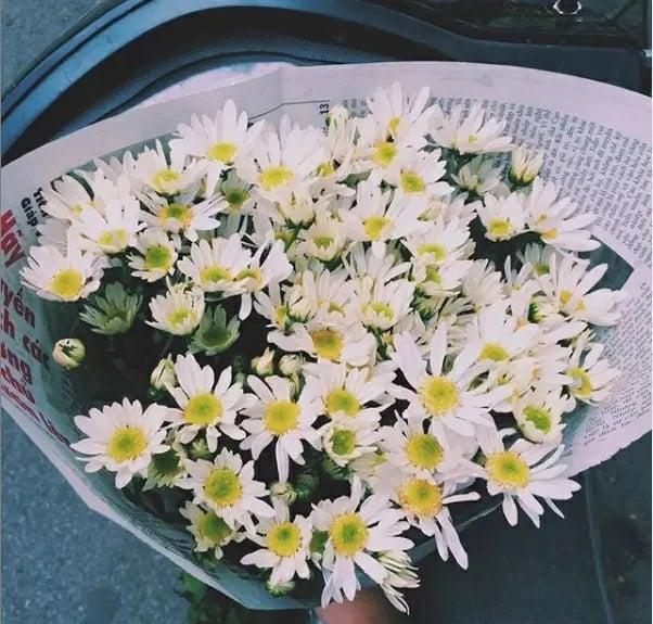 Cúc họa mi nở tháng mấy, ý nghĩa hoa cúc họa mi không phải ai cũng biết 4