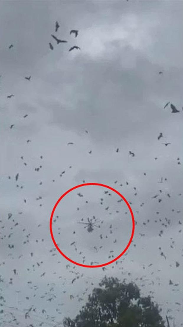 Cả thị trấn nhỏ sợ hãi khi thấy hàng nghìn con dơi xâm chiếm 1