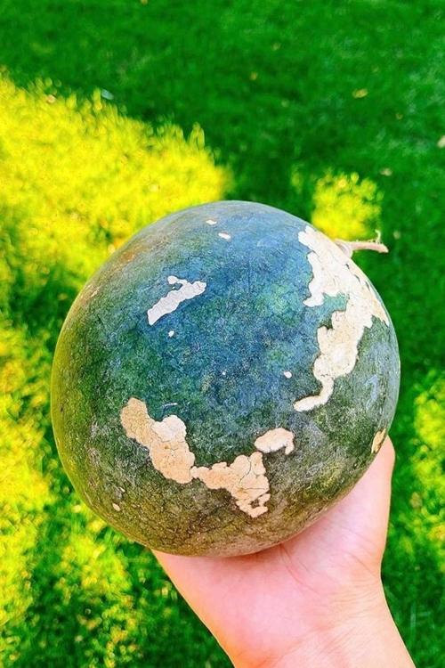 Phạm Hương khoe thu hoạch trái cây trong khu biệt thự gia đình 4