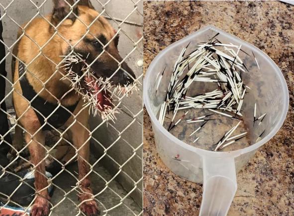 Cảnh sát Mỹ dừng truy bắt nghi phạm để cứu chó nghiệp vụ 1