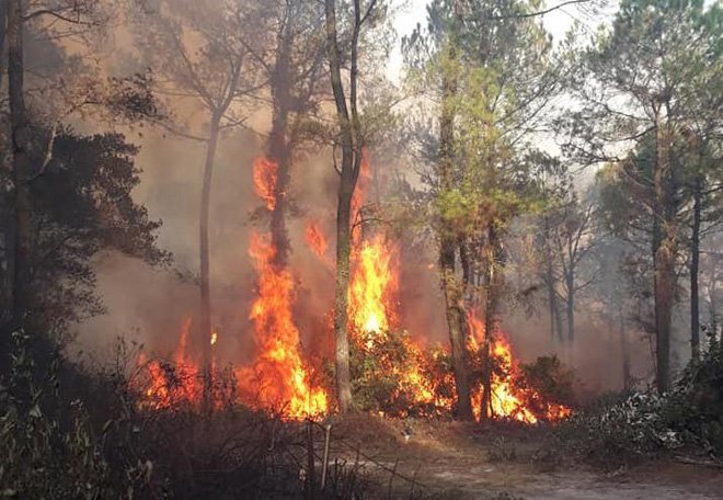 Danh tính người nghi gây ra vụ cháy rừng lớn nhất Hà Tĩnh 1