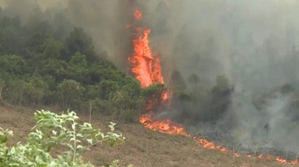 Cháy rừng lại bùng phát ở Quảng Bình 1