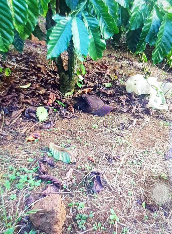 Bắt nghi phạm vụ sát hại người tình trong vườn cà phê 2