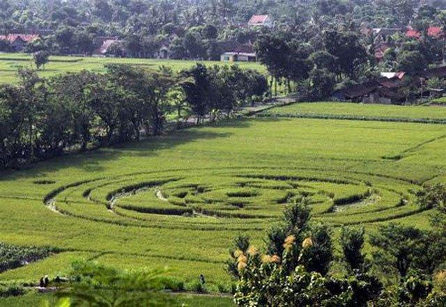 Vòng tròn hoa văn tinh xảo khổng lồ đầy bí ẩn bất ngờ xuất hiện trên cánh đồng ngũ cốc chỉ sau một đêm 3