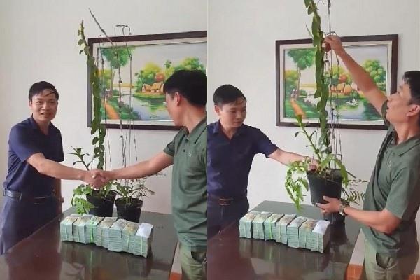 Đại gia Hà Tĩnh tiết lộ mục đích ra Hải Phòng mua 2 chậu lan
