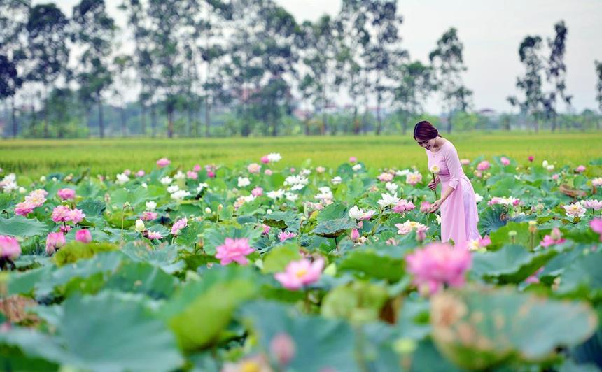 Một số địa điểm chụp sen hút khách mỗi dịp hè về ngay tại Hà Nội 4