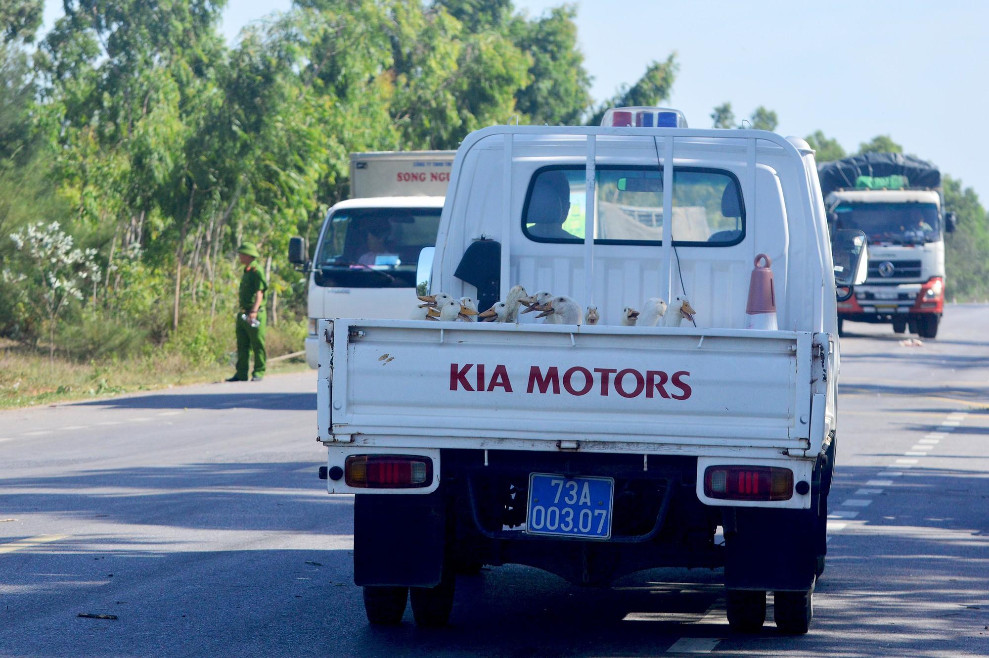 Người dân thi nhau 'hôi vịt' từ xe tải, công an phải đi vận động trả lại 7
