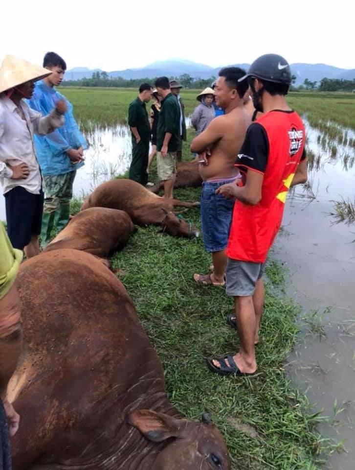Hà Tĩnh: Sét đánh 1 người nguy kịch, 6 con bò chết trong mưa giông 1