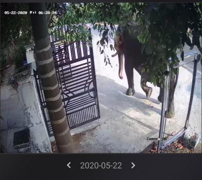Thanh niên bị voi nhà dùng ngà húc tử vong trong lúc mở xích 2