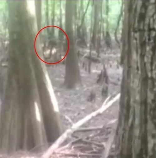Người phụ nữ chụp được sinh vật bí ẩn cao 2 mét giống người thằn lằn 2
