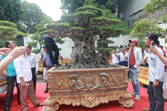 Phần ngọn cây sanh cổ sau 10 năm tạo tác được bán với giá 28 tỷ đồng 2