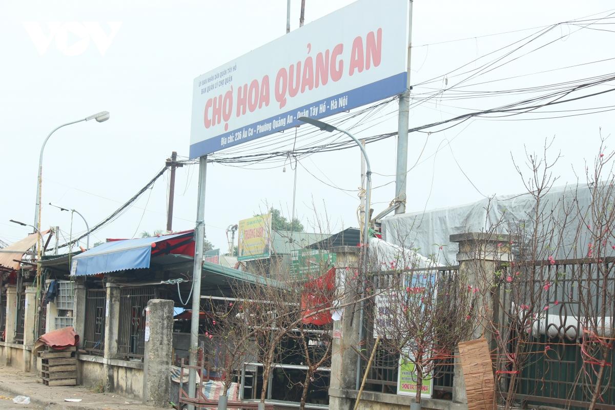 Hà Nội: Đào cổ thụ nghìn đô rục rịch xuống phố đón Tết sớm 5