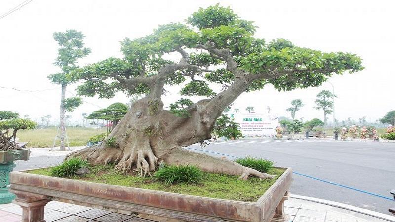 ابر درخت