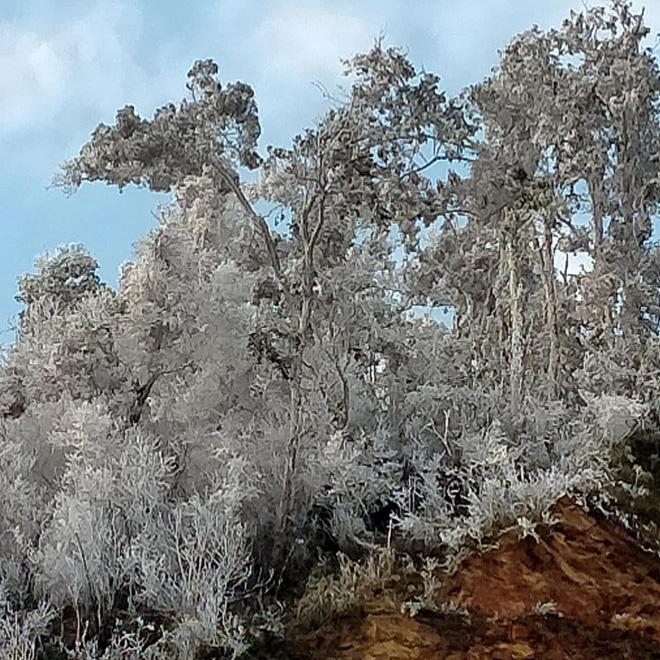 برف هنوز هم به شدت در حال باریدن است و جنگل درختان را در منطقه مرزی Nghe An 2 پوشانده است