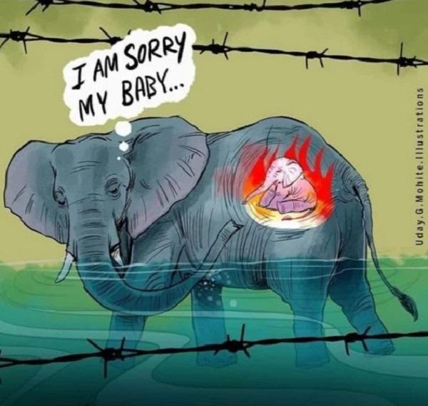 Khi con người cũng là lữ khách thì đừng đối xử tàn ác với muôn loài! 2