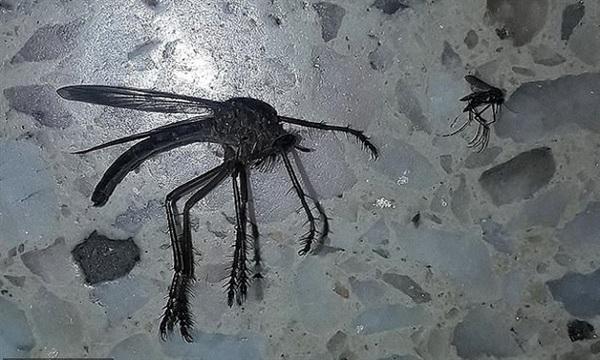 Cơn lốc muỗi lớn chưa từng thấy tạo cảnh tượng như trong phim kinh dị 3