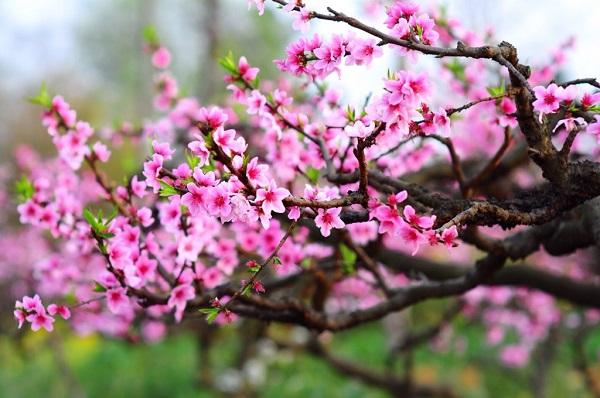 Bản tin dự báo thời tiết Tết Nguyên đán 2021 (2-16/2): Tháng Chạp trời mưa rét, ra Giêng trời ấm dần có nắng 2